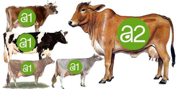 A1-A2-Milk-1.jpg